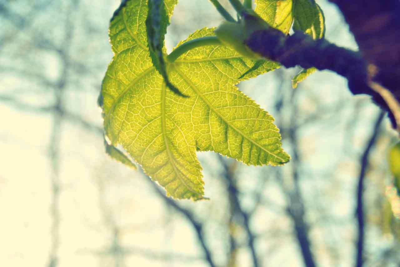 leaf_light